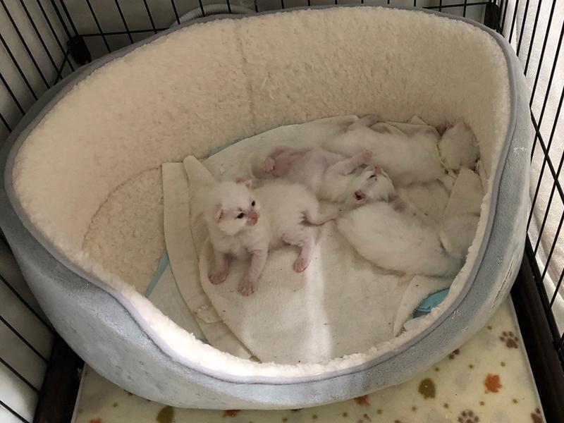 2021年2月17日生まれの子猫たち