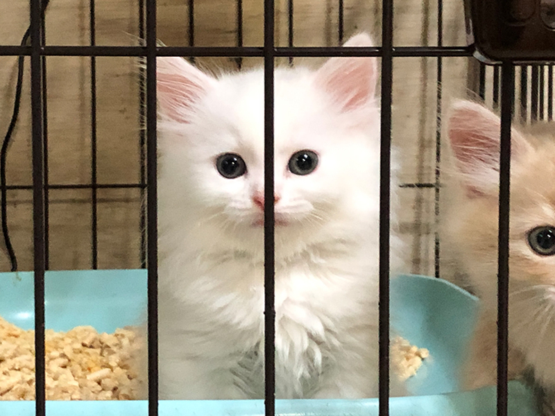 2021年7月29日生まれの子猫
